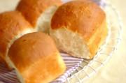ご飯食パン