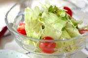 ガーリックドレッシングがけレタスのサラダ