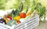 暑さに負けない体をつくろう! 旬の夏野菜で夏バテを撃退!