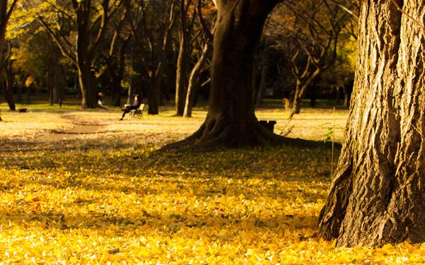 距離を縮めたいカップルにおすすめ!秋の都内・お散歩デートプラン