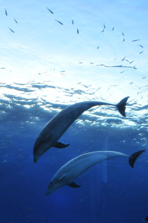 イルカの画像 p1_3