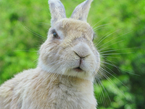ウサギの画像 p1_4