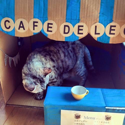 準備中@cafe de LEO| ウーマンエキサイト みんなの投稿