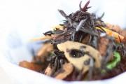 芽ひじきの煮物