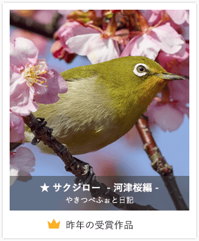★ サクジロー - 河津桜編 -/やきつべふぉと日記