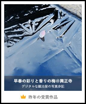 早春の彩りと香りの梅@興正寺/デジタルな鍛冶屋の写真歩記